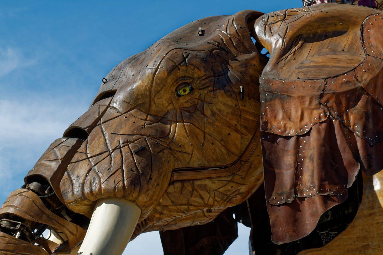 elephant-4306251_1920